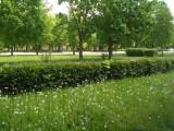 Гродно - зеленый город!