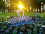 Чудесный летний рассвет. Зарождение нового